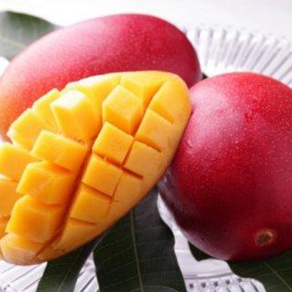 夏が旬!完熟マンゴーと魅惑のマンゴースイーツ勢揃い