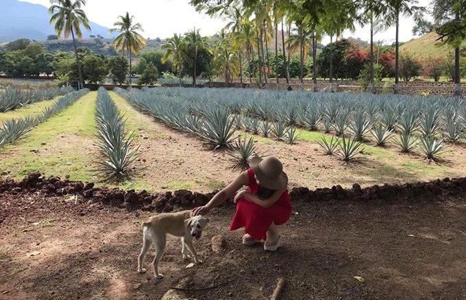 世界遺産のアガベ畑を眺めてテキーラを味わう!祖父への愛から生まれたフォルタレサ