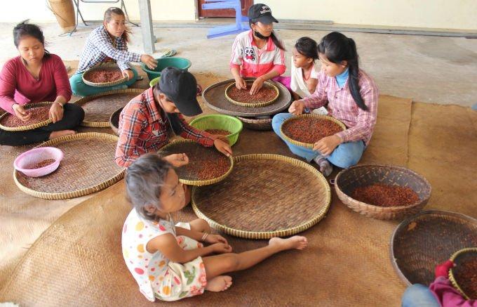 カンボジア産の胡椒!?