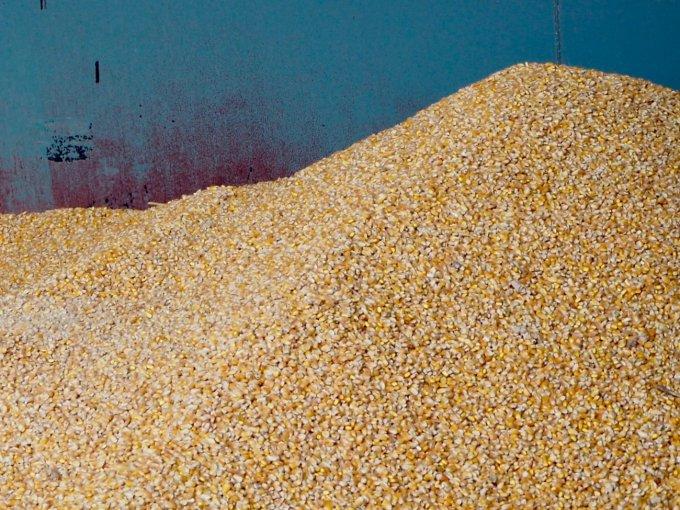 話題のスーパー大麦「バーリーマックス」がふりかけに?