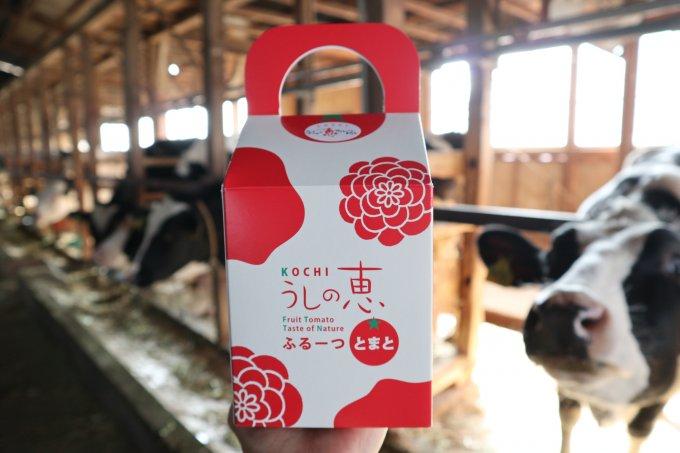 太陽がいっぱいの高知県のうしの恵みトマト