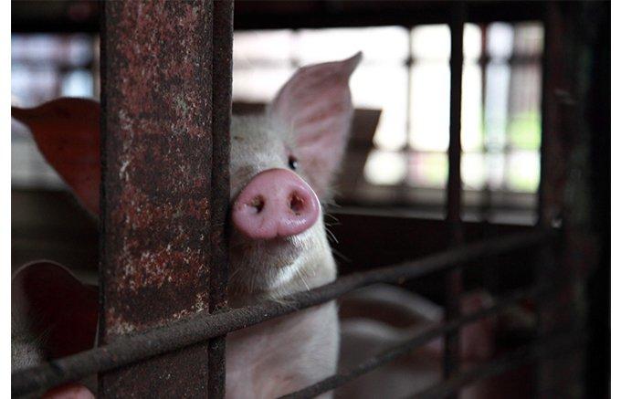 添い寝して飼育 完全無添加!五島牧場のハム・ソーセージ・バター
