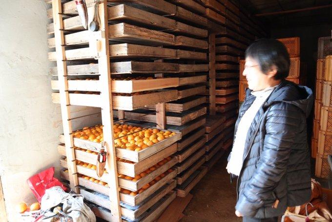 IT化されていない農家の新鮮さがおいしい絶品ポンカン
