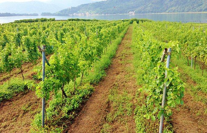 京都・天橋立を目の前に望むワイナリーが作る純国産生葡萄100%使用の絶品ワイン