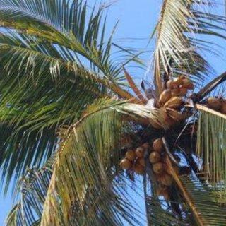 食べて旅して綺麗になろう:スリランカ編