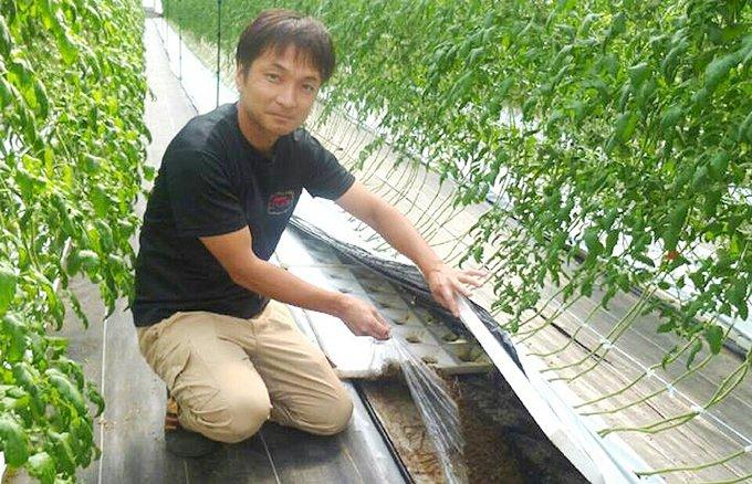 メディアも注目!甘くて美しい 宮崎県都農発「ごくとま」とスイーツ