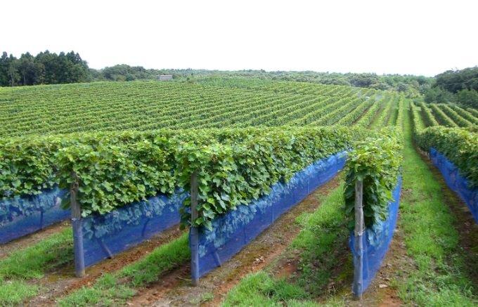 石川県発!オーク樽で約6ヶ月間に渡って貯蔵・熟成された美味しい「ワイン」