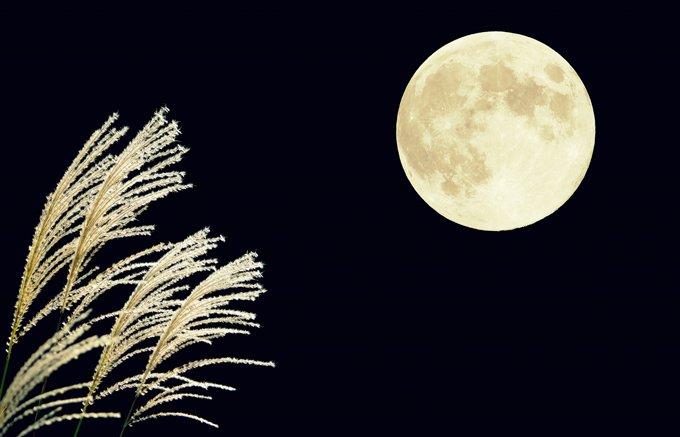 凛と輝く満月を祝うスイーツ!限定個数販売の貴重な「ムーンケーキ」