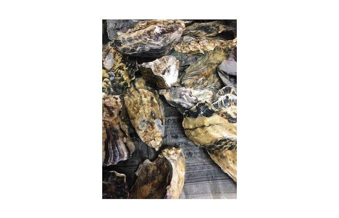 旬を逃すな!自然の旨味がぎっしり詰まった日向灘育ちの宮崎・庵川の「天然岩牡蠣」