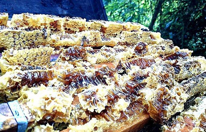 1年の間に1度だけ作る廣田養蜂場の極みのはちみつ【第3弾】