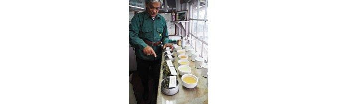 マスカットを彷彿させるマカイバリ茶園のダージリン2015セカンドフラッシュ