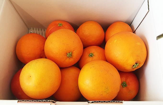 今が旬!希少品種!愛媛県産ブラッドオレンジ