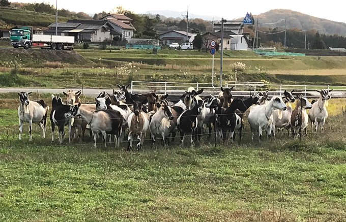 100%グラスフェット!山の中で自然放牧されている牛のミルクで作られるヨーグルト