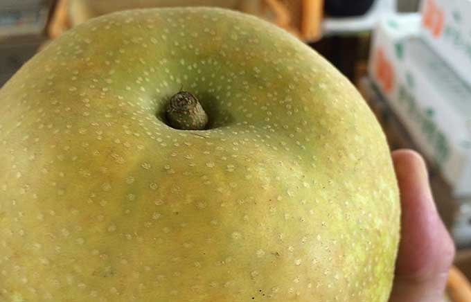 埼玉・久喜市「大澤農園」の梨が美味しい!その由縁とは?