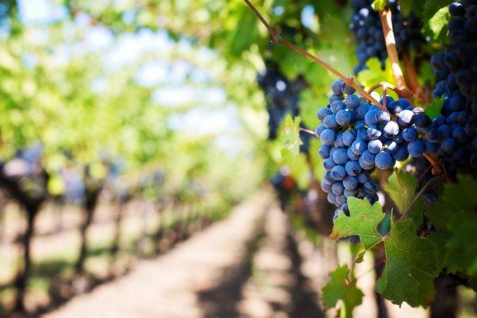 今、世界中で注目されているメキシコワインの魅力に迫る