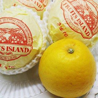 肥料とは思えない芳香な香りに衝撃!こだわり栽培が産む和製グレープフルーツ