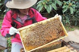 千葉の女性養蜂家が作る枇杷のはちみつがハニー・オブ・ザ・イヤーで優秀賞を獲得