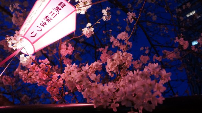 春限定!満開の桜の下で食べたい「花歳時 桜衣」