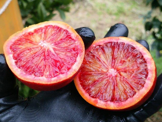 鮮やかな赤に魅せられて!香り豊かな愛媛県宇和島産の「ブラッドオレンジ」