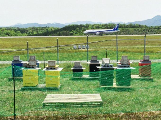 第3回ハニー・オブ・ザ・イヤーでグランプリを獲得した!空港で作られる至宝の蜂蜜