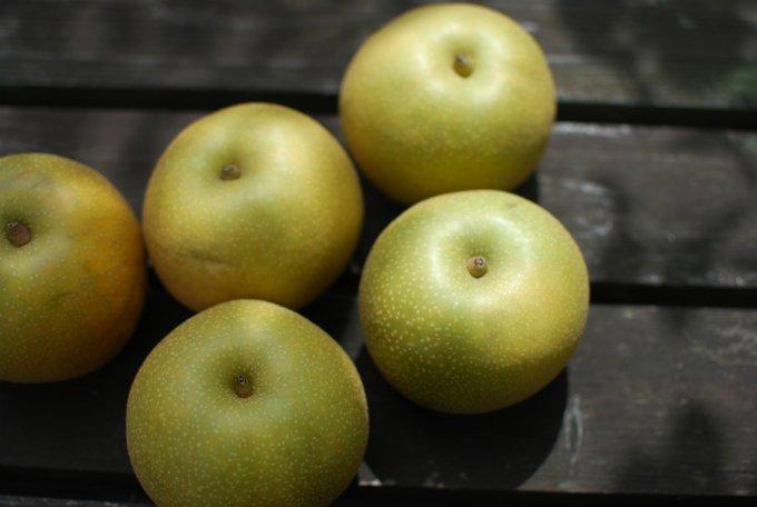 北限の地より、果汁溢れる梨を。「太陽と雨と風が育てた北浦梨」
