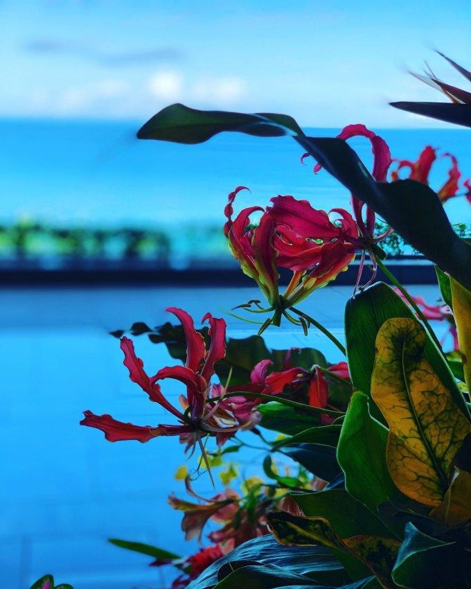 食べて旅して綺麗になろう:沖縄編PART3