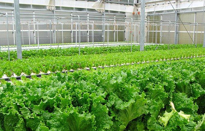 名水と職人芸が育てるフレッシュ野菜