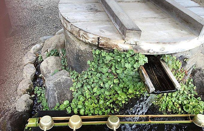 4月の運気をあげる星座別ラッキーフード!水神がいる聖地で見つけた飲み物とは!
