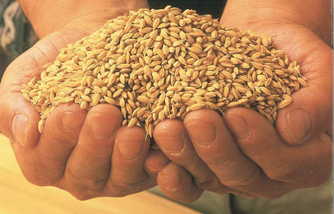かりんと百米は山形県から生まれた「かりんとう」の概念をこえる美味しさ