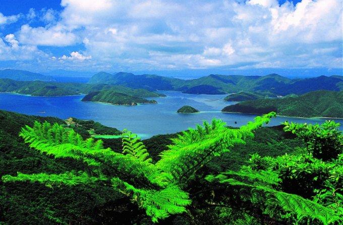 話題の酢!健康長寿の島に伝わる神秘の「かけろまきび酢」