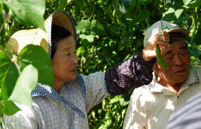 茨城県が誇る、一粒の重さが約2gと大粒な花豆「常陸大黒(ひたちおおぐろ)」