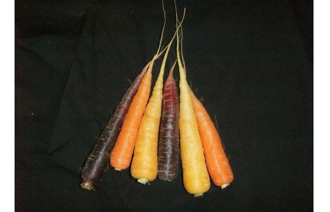 四季の流れを野菜で感じる!石川県で生産される『NOTO 高農園』の美味しい野菜