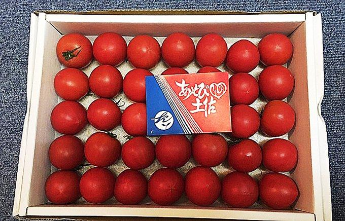 冬だからこそ食べたい!超濃厚・超高級「土佐まほろばトマト」