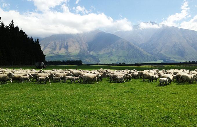 「四季を1日で味わえる?」ニュージーランドの自然と羊肉のおいしい関係