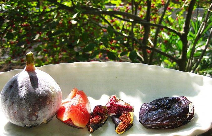 【黒いダイヤモンド】初秋に蜜のようにねっとりとした甘さの佐賀・唐津「黒イチジク」