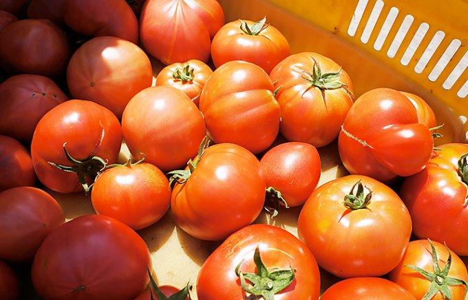 「つぶつぶ」と「さらさら」どっちが好み?トマト好きをうならせる直球トマトジュース