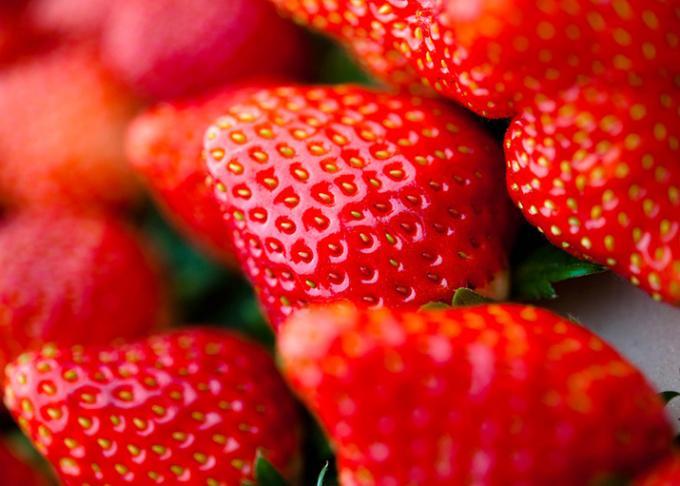 甘みや酸味のバランスが素晴らしい茨城のイチゴ