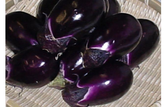 美味しさがギュッと詰まった!石川県の自然豊かな土地で育つ「加賀野菜」