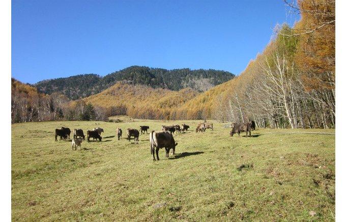 熟成期間は10ヶ月以上!美味しさいっぱい詰まった清水牧場チーズ工房の「バッカス」