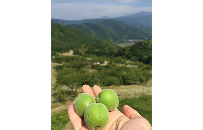 夏の疲れに!伊豆の梅農家から生まれた梅シロップ