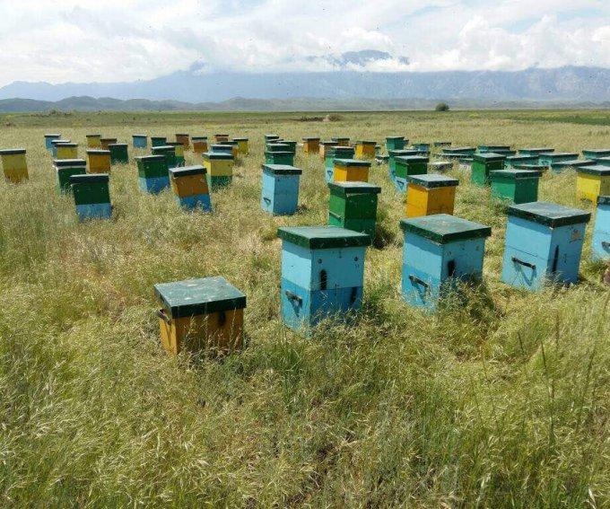 【第3回ハニー・オブ・ザ・イヤー】キルギス産エスパルセットが来場者特別賞を受賞